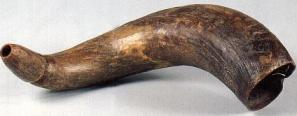 Horn Of An Animal 1