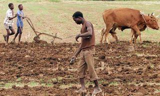 Africa-farming-006