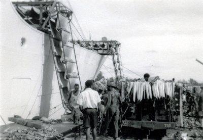 Tiko_1959a